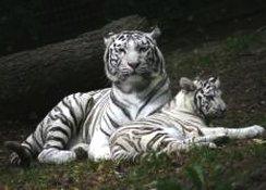 Les 700 animaux du zoo de la Boissière du Doré vous attendent.